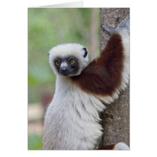 Madagascar, Ankarafantsika Reserve, Ampijoroa. Card
