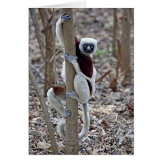 Madagascar, Ankarafantsika Reserve; Ampijoroa; Card