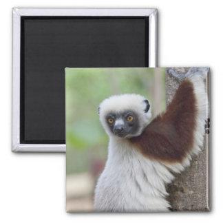 Madagascar, Ankarafantsika Reserve, Ampijoroa. Square Magnet