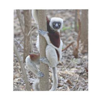 Madagascar, Ankarafantsika Reserve; Ampijoroa; Notepad