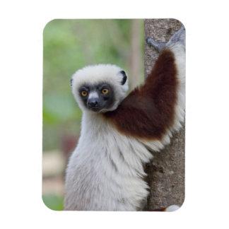 Madagascar, Ankarafantsika Reserve, Ampijoroa. Flexible Magnets