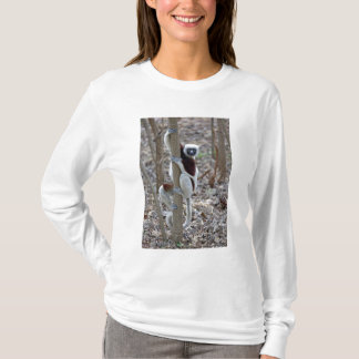 Madagascar, Ankarafantsika Reserve; Ampijoroa; T-Shirt