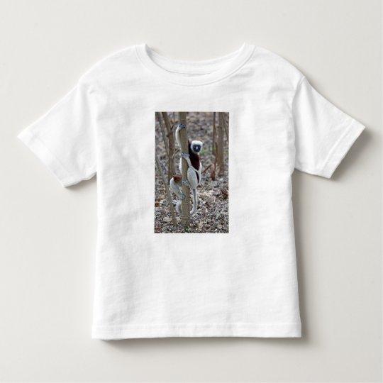 Madagascar, Ankarafantsika Reserve; Ampijoroa; Toddler T-Shirt