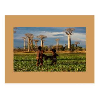 Madagascar Baobab Postcard