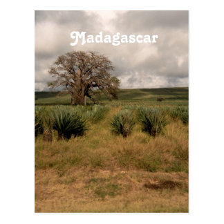 Madagascar Countryside Postcard