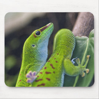Madagascar day gecko mouse mat