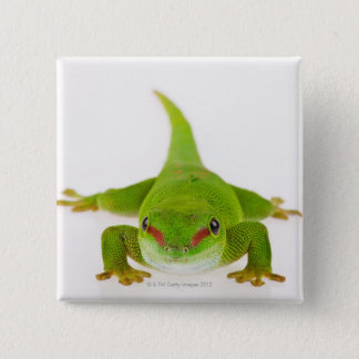 Madagascar day gecko (Phelsuma madagascariensis) 15 Cm Square Badge