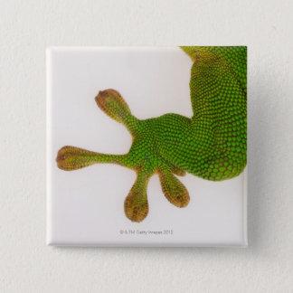 Madagascar day gecko (Phelsuma madagascariensis 2 15 Cm Square Badge