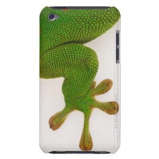 Madagascar day gecko (Phelsuma madagascariensis 2 Barely There iPod Cases
