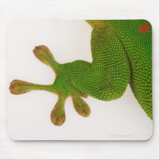 Madagascar day gecko (Phelsuma madagascariensis 2 Mouse Mat