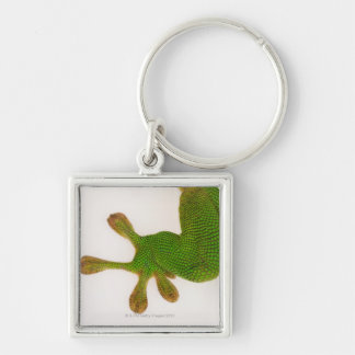 Madagascar day gecko (Phelsuma madagascariensis 2 Silver-Colored Square Key Ring