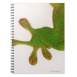 Madagascar day gecko (Phelsuma madagascariensis 2 Spiral Notebook