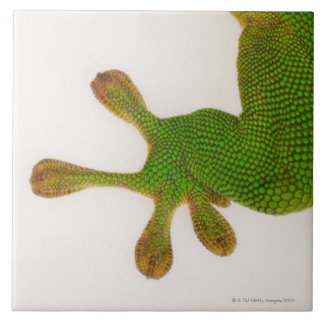 Madagascar day gecko (Phelsuma madagascariensis 2 Tile