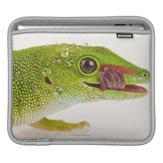 Madagascar day gecko (Phelsuma madagascariensis iPad Sleeve