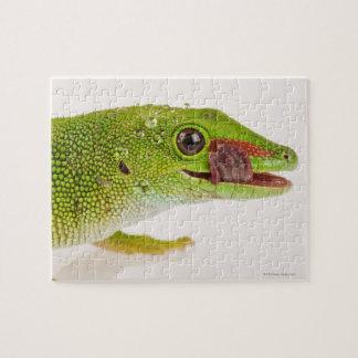 Madagascar day gecko (Phelsuma madagascariensis Jigsaw Puzzle