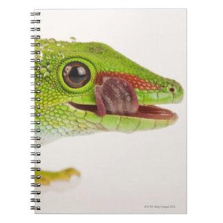 Madagascar day gecko (Phelsuma madagascariensis Notebooks