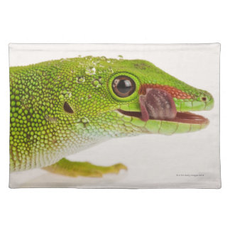 Madagascar day gecko (Phelsuma madagascariensis Place Mat