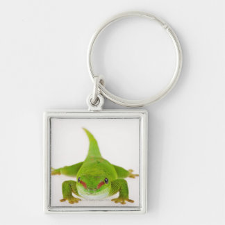 Madagascar day gecko (Phelsuma madagascariensis) Silver-Colored Square Key Ring