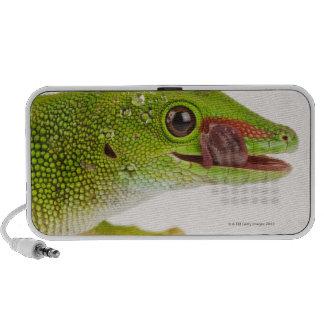 Madagascar day gecko (Phelsuma madagascariensis Notebook Speakers