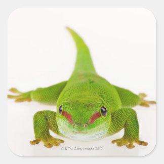 Madagascar day gecko (Phelsuma madagascariensis) Stickers