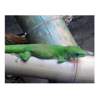 Madagascar Giant Day Gecko Postcard