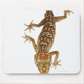 Madagascar ground gecko (Paroedura pictus) on Mouse Mat