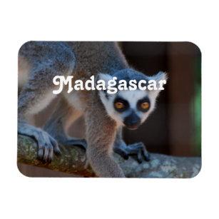 Madagascar Lemur Magnet