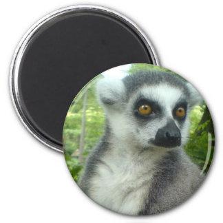 Madagascar Lemur Round Magnet