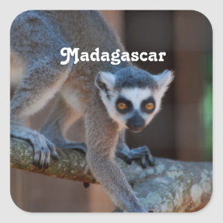 Madagascar Lemur Square Sticker