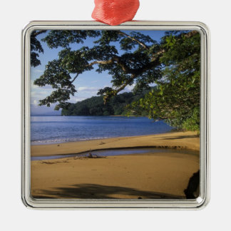 Madagascar, Nosy Mangabe Special Reserve, on Silver-Colored Square Decoration