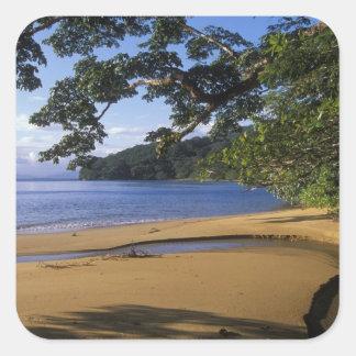 Madagascar, Nosy Mangabe Special Reserve, on Square Sticker