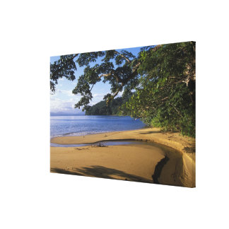 Madagascar, Nosy Mangabe Special Reserve, on Stretched Canvas Prints