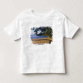 Madagascar, Nosy Mangabe Special Reserve, on T-shirts
