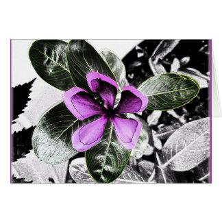 Madagascar Periwinkle Flower Blank Greeting Card