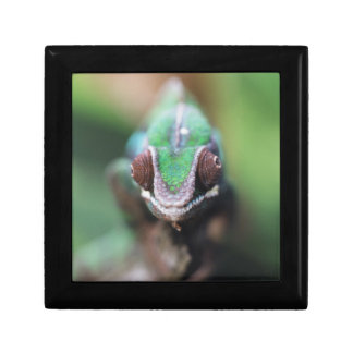 Madagascar, Red bar Panther Chameleon Gift Box