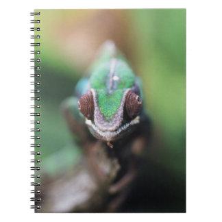 Madagascar, Red bar Panther Chameleon Notebook