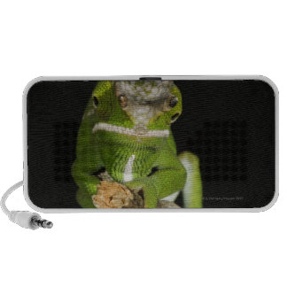 Madagascar Mini Speaker