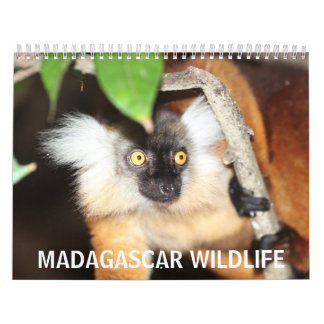 Madagascar Wildlife Wall Calendar