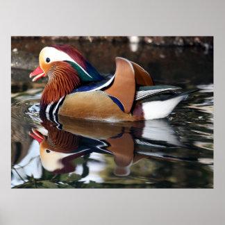 Madarin Duck Posters