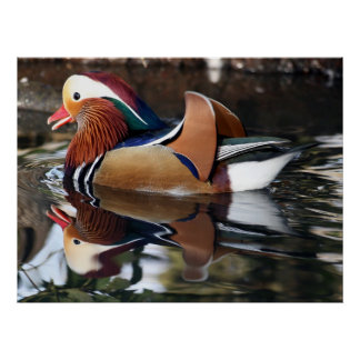 Madarin Duck Print
