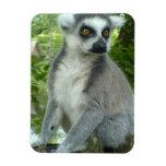 Madasgcar Lemur Premium Magnet Magnet