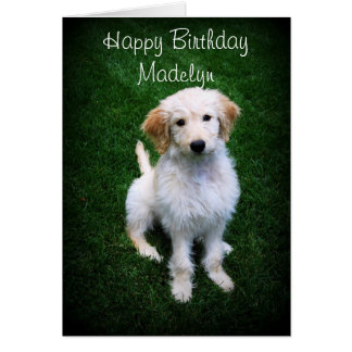 Madelyn Happy Birthday Golden Doodle Puppy Card