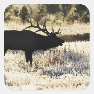 Madison River, Yellowstone NP, Wyoming, USA Square Sticker