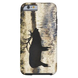 Madison River, Yellowstone NP, Wyoming, USA Tough iPhone 6 Case