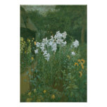 Madonna Lilies in a Garden Poster