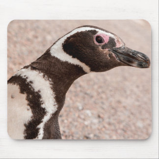 Magellanic Penguin, Patagonia, Argentina Mouse Mat