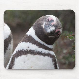 Magellanic Penguin Portrait Mouse Mat