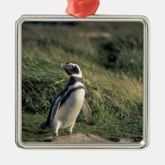 Magellanic Penguin (Spheniscus magellanicus), Christmas Ornament