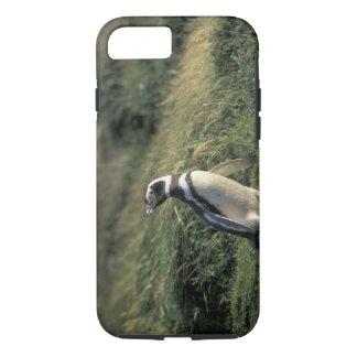 Magellanic Penguin (Spheniscus magellanicus), iPhone 8/7 Case