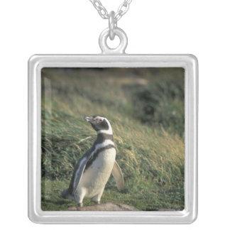 Magellanic Penguin (Spheniscus magellanicus), Silver Plated Necklace